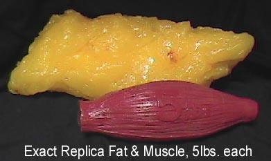 5磅重的肥肉和肌肉比較